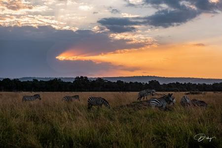 _DSC9783-HDR Africa, Africa V, Kenya, Masai Mara, Paisajes,