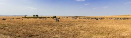 DSC_2268-2-Pano Africa, Africa V, Impala, Kenya, Masai Mara,