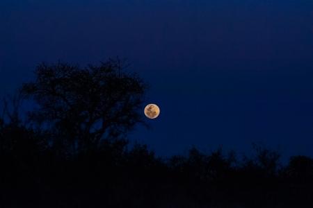 DSC_5061 Africa V, Astronómica, luna, Paisajes, Sur Africa.