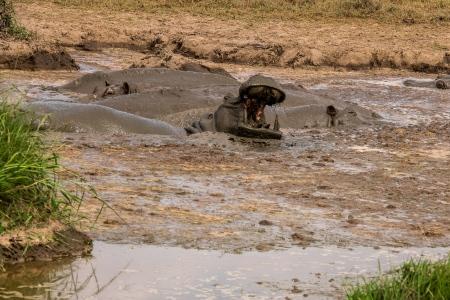 DSC_2870 Africa, Africa V, hipopotamo, Kenya, Masai Mara.jpg