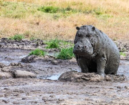 DSC_2896 Africa, Africa V, hipopotamo, Kenya, Masai Mara.jpg