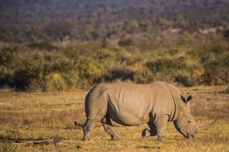 DSC_4620 Africa V, Rinoceronte, Sur Africa.jpg