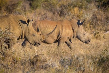DSC_4636 Africa V, Rinoceronte, Sur Africa.jpg