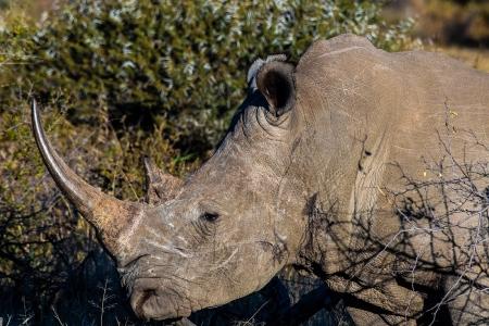DSC_4666 Africa V, Rinoceronte, Sur Africa.jpg