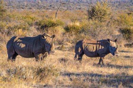 DSC_4640 Africa V, Rinoceronte, Sur Africa.jpg