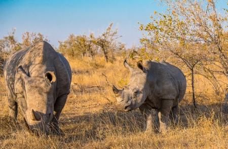 DSC_6258 Africa V, Rinoceronte, Sur Africa.jpg