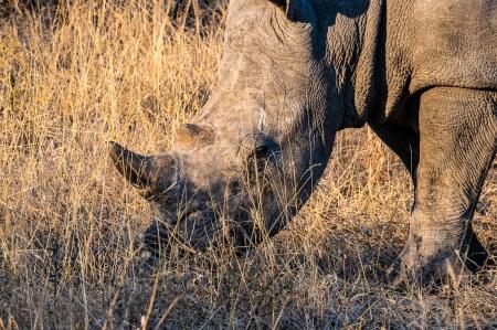 DSC_6458 Africa V, Rinoceronte, Sur Africa.jpg