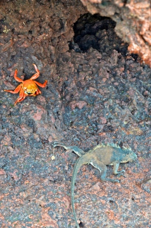 Zayapa e Iguana Marina