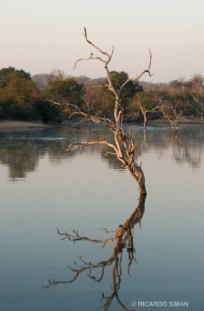 Paisaje en Parque nacional Kruguer, reserva Ulusaba, Sur Africa
