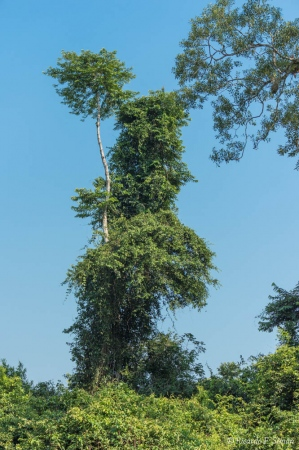 _DSC4527 Selva Amazonica, Brasil