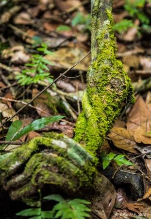 DSC_5759 Selva Amazonica,Brasil