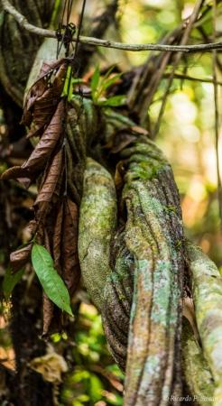DSC_5812 Selva Amazonica,Brasil