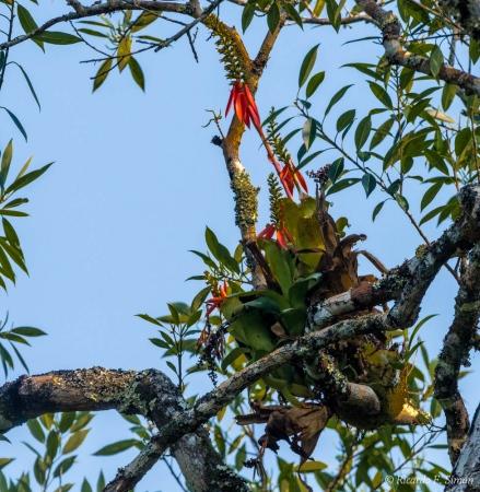 DSC_6012 Flora Brasileña,Brasil