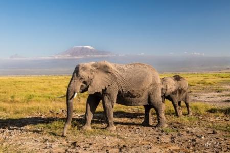 _DSC0185 Africa, Africa V, Ambosseli, Elefante, Kenya, Monte
