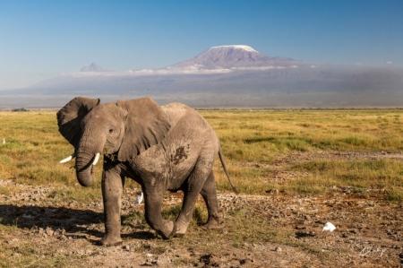 _DSC0213 Africa, Africa V, Ambosseli, Elefante, Kenya, Monte