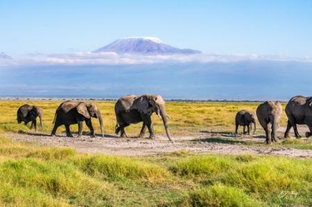 _DSC2745 Africa, Africa V, Ambosseli, Elefante, Kenya, Monte