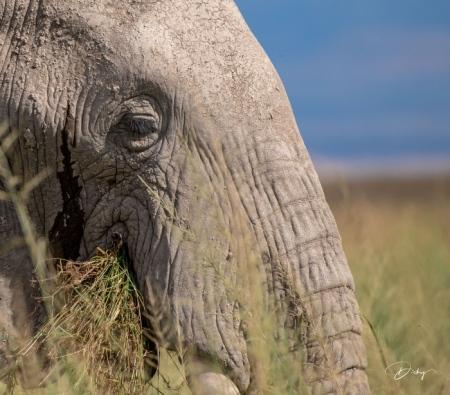 _DSC8508 Africa, Africa V, Ambosseli, Elefante, Kenya.jpg