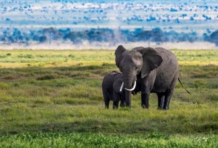 _DSC8621 Africa, Africa V, Ambosseli, Elefante, Kenya.jpg