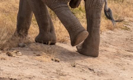 DSC_0260-2 Africa, Africa V, Ambosseli, Elefante, Kenya.jpg
