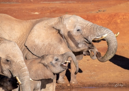 DSC_3481 Africa V, Elefante, Sur Africa.jpg