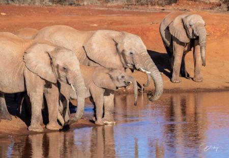 DSC_3531 Africa V, Elefante, Sur Africa.jpg