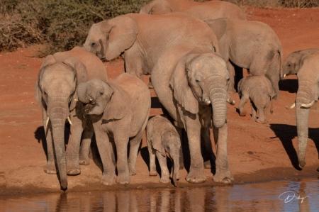 DSC_3570-2 Africa V, Elefante, Sur Africa.jpg