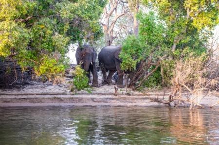 DSC_4386-2 Africa V, Elefante, rio zambezi, Zambia.jpg