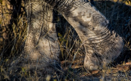 DSC_4537-2 Africa V, Elefante, Sur Africa.jpg