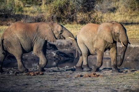DSC_4685 Africa V, Elefante, Jugando, Sur Africa.jpg