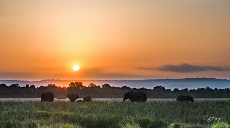 DSC_4767-2-HDR Africa, Africa V, Elefante, Kenya, Masai Mara