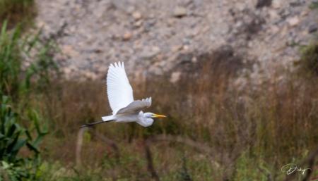 DSC_9840 Garza Blanca, Sitio Arqueologico Caral.jpg