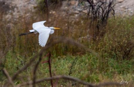 DSC_9841 Garza Blanca, Sitio Arqueologico Caral.jpg