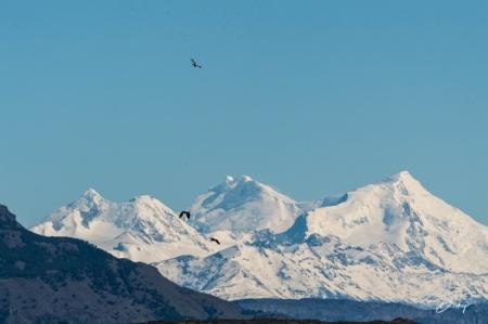 DSC_2037 Argentina, aves sobrevolando, Parque Nacional Los G