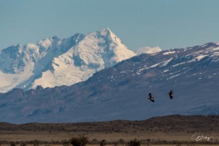 DSC_2046 Argentina, aves sobrevolando, Parque Nacional Los G