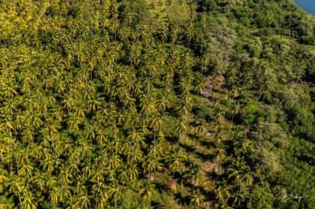 DSC_3672 Bahia de Jiquilisco, Cocotales, Usulutan.jpg