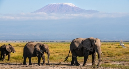 _DSC2757 Africa, Africa V, Ambosseli, Elefante, Kenya, Monte