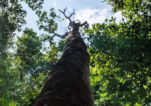 Alta Floresta, Brasil