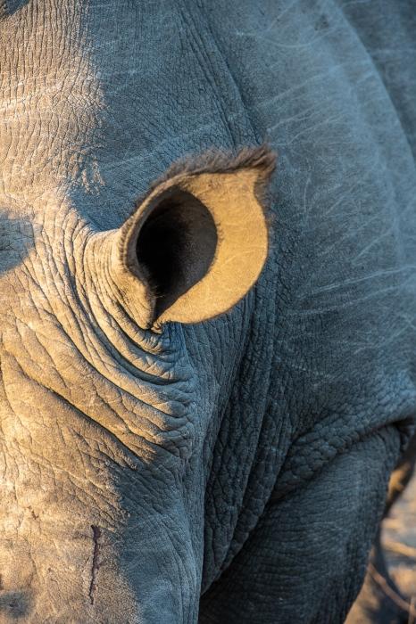 DSC_6504 Africa V, Rinoceronte, Sur Africa.jpg