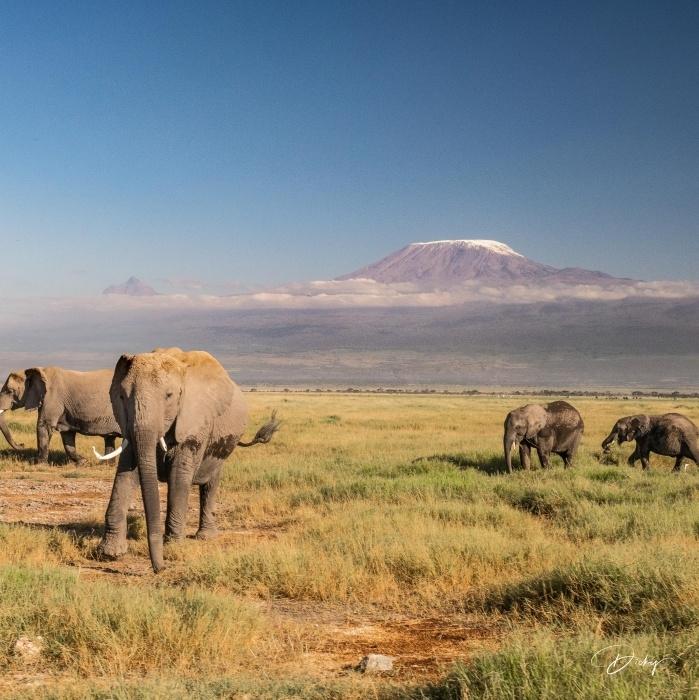 _DSC0140 Africa, Africa V, Ambosseli, Elefante, Kenya, Monte