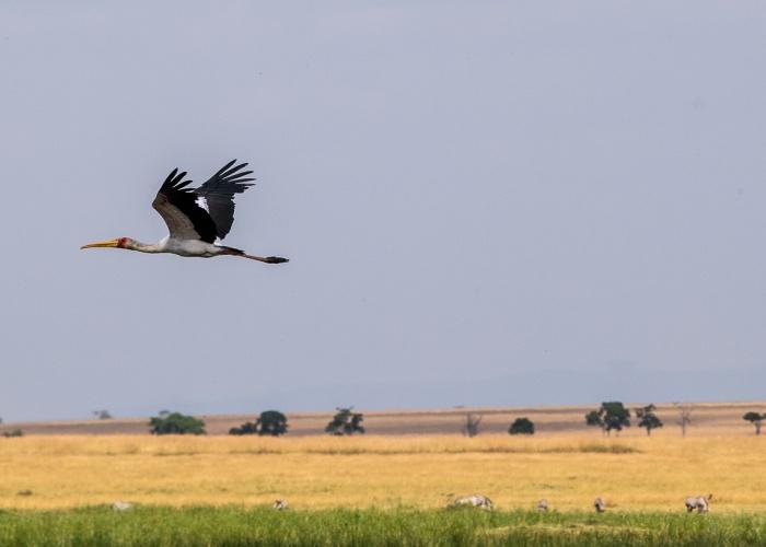 Aves de África