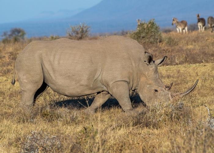 Rinocerontes & Hienas