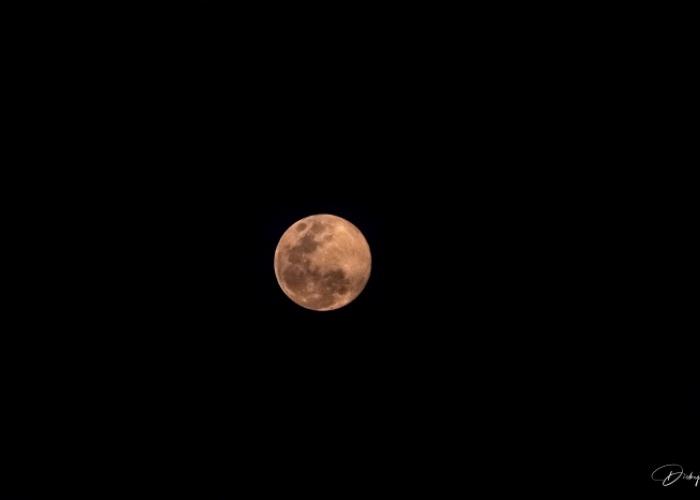 DSC_8548 Luna Rosada.jpg