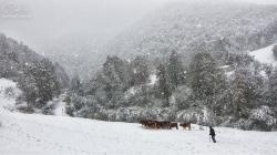 Recogiendo el ganau pola invernada