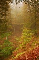 Dentro del bosque.