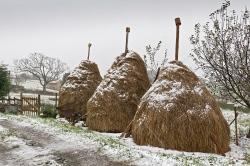 Facines bajo la nieve