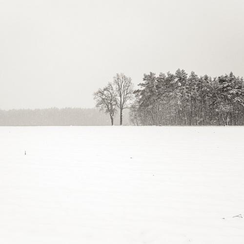 baja Silesia.- lower silesian -. 2016