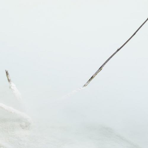 charca blanca. Avilés. 2011