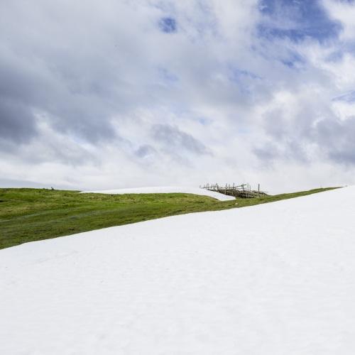SNOW color