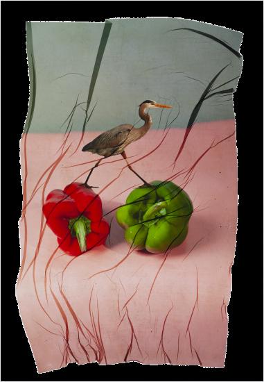 transferencia de emulsion de pajaro sobre pimiento rojo y verde