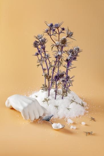 bodegon de plantas sobre base de sal con pajaro